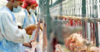 Felfüggesztésre kerül a Vidékfejlesztési Program élelmiszeripari pályázata!